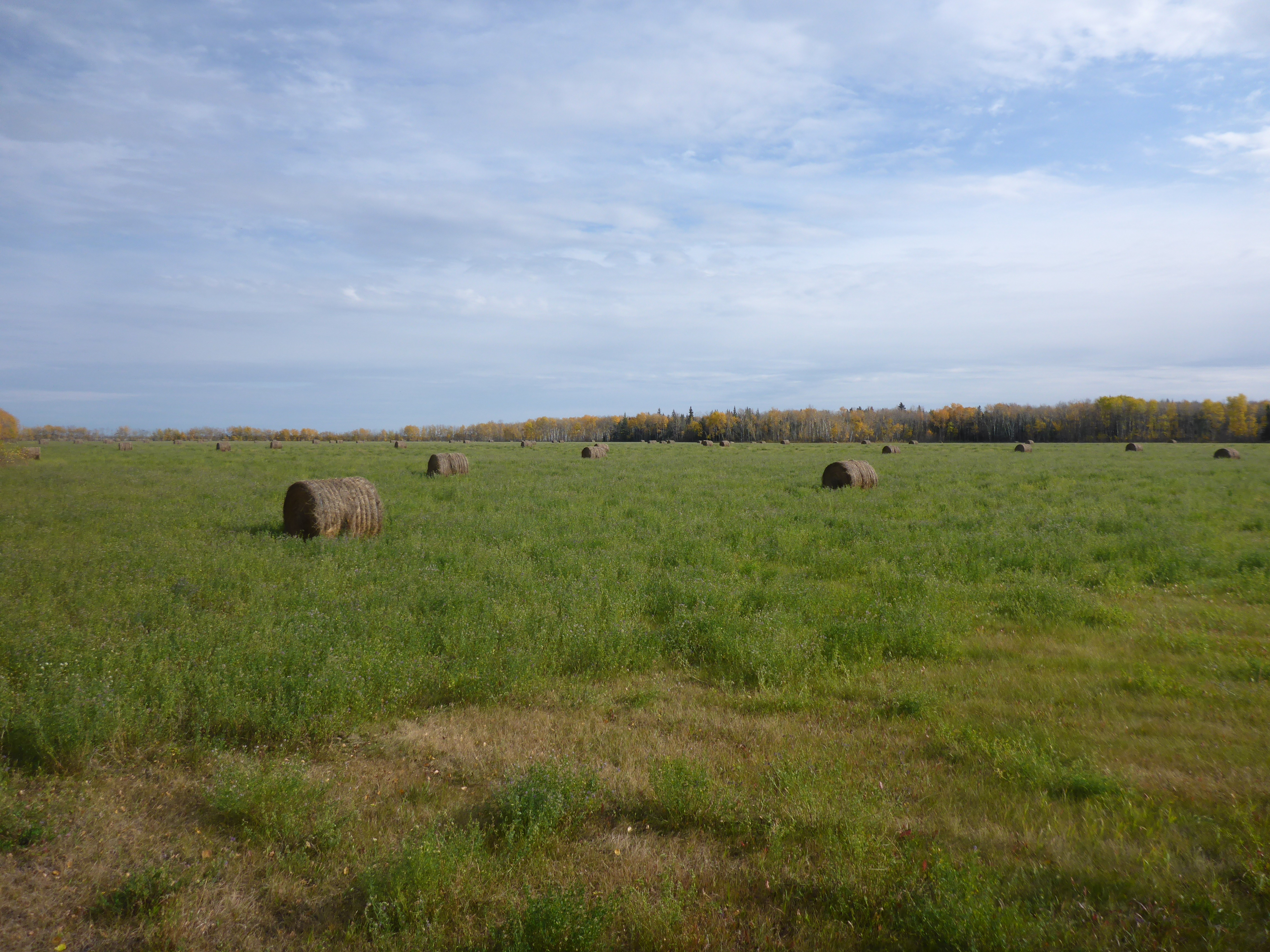 Field with Bales-1.jpg